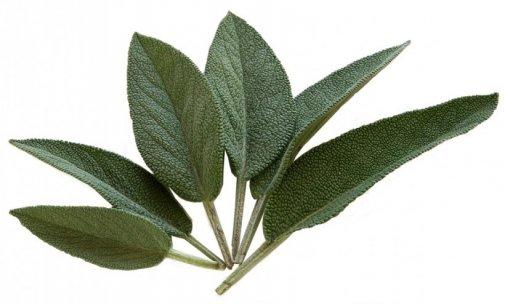 plantes bouffées de chaleur ménopause