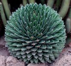 sirop d agave 3