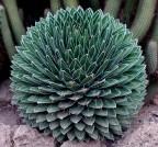 sirop d agave 3