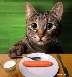 Chat maigre qui mange beaucoup
