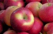 La pomme un coupe faim naturel astuces pratiques - Boisson coupe faim naturel ...