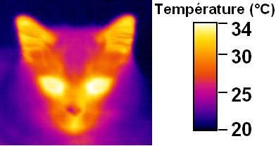 La température d'un chat