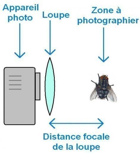 macrophotographie avec une simple loupe 0