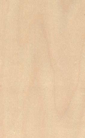 Les bois: le Bouleau