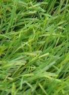 Nettoyer une tache d'herbe