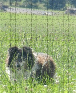 effet puzzle sur une photo avec photofiltre 0