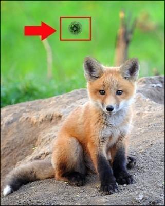 supprimer rayures image photofiltre tampon de clonage 3