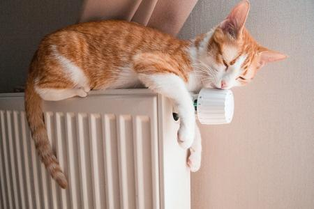 chatte en chaleur 0