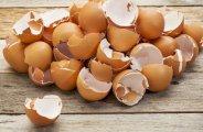 Pourquoi consommer des coquilles d'œuf ?