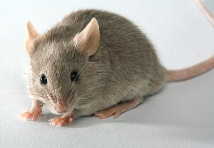 Faire partir les souris
