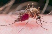 Que faire en cas de piqûre de moustiques ?