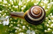 La bave d'escargot en cosmétique