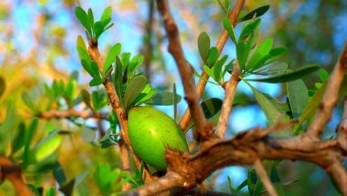 4 applications de l huile d argan 1