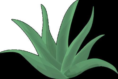 Aloe vera pour la peau sèche
