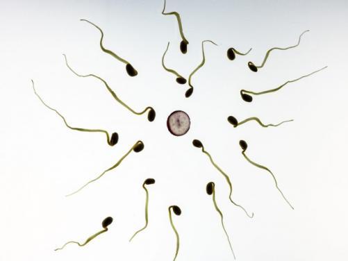 augmenter ses chances de grossesse 2