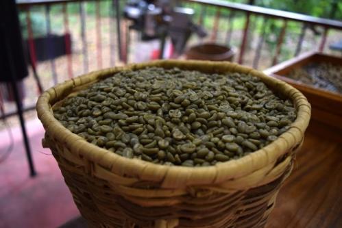 cafe vert et perte de poids 2