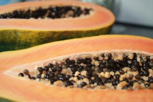 graines de papaye et sante 1