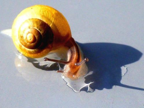 la bave d escargot en cosmetique 2