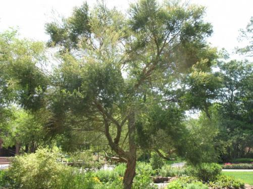 les bienfaits de l huile d arbre a the 1